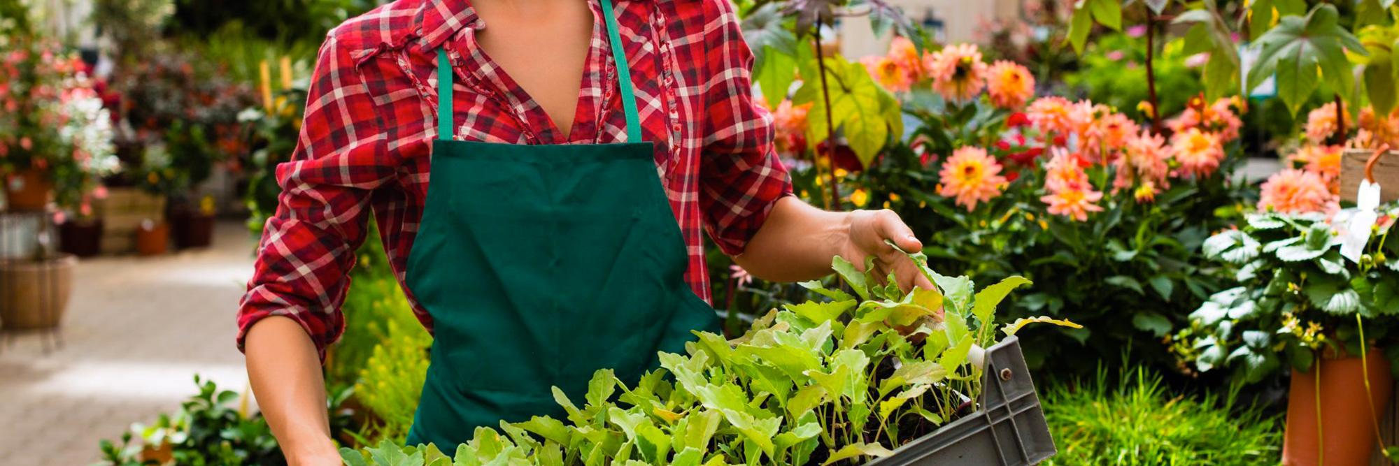 Immagini Piante E Fiori vivaio piante e fiori - gozzano - novara - dido floricultura